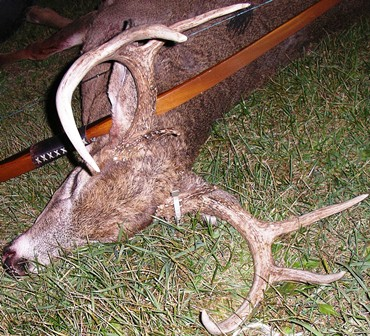 Does Wild Venison Tastes Best when Procured in September or Early October?